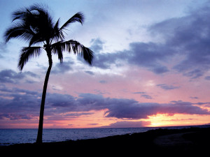 1ハワイ画像